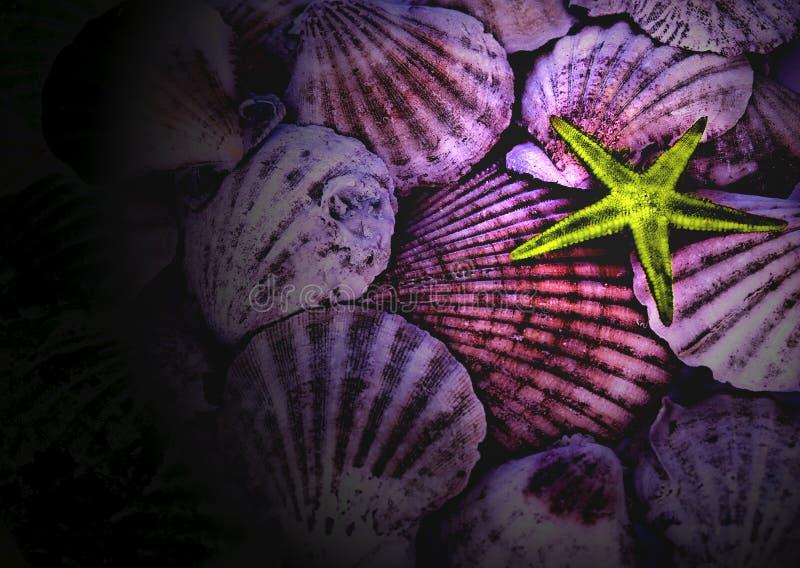 Shelles del mar imagen de archivo