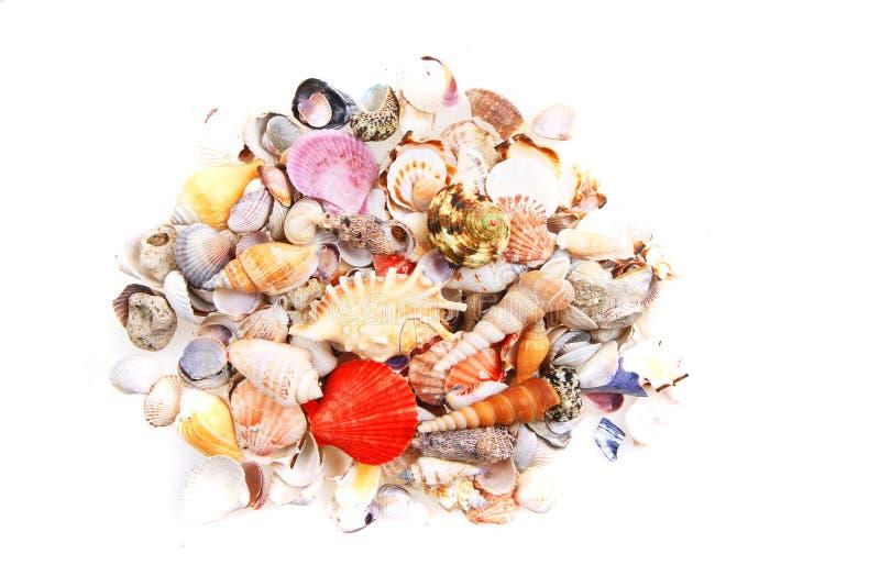 Shelles del mar aislados imagenes de archivo