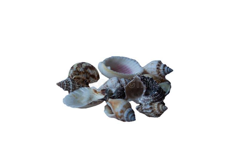 Shelles del mar aislados en el fondo blanco foto de archivo