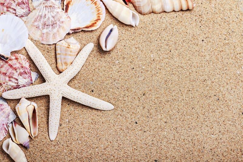 Shelles del mar con la arena fotos de archivo