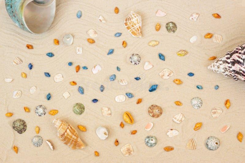 Shelles del mar con la arena como fondo Endecha plana Visi?n superior fotos de archivo libres de regalías