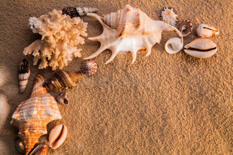 Shelles del mar con la arena como fondo Playa del verano imagenes de archivo