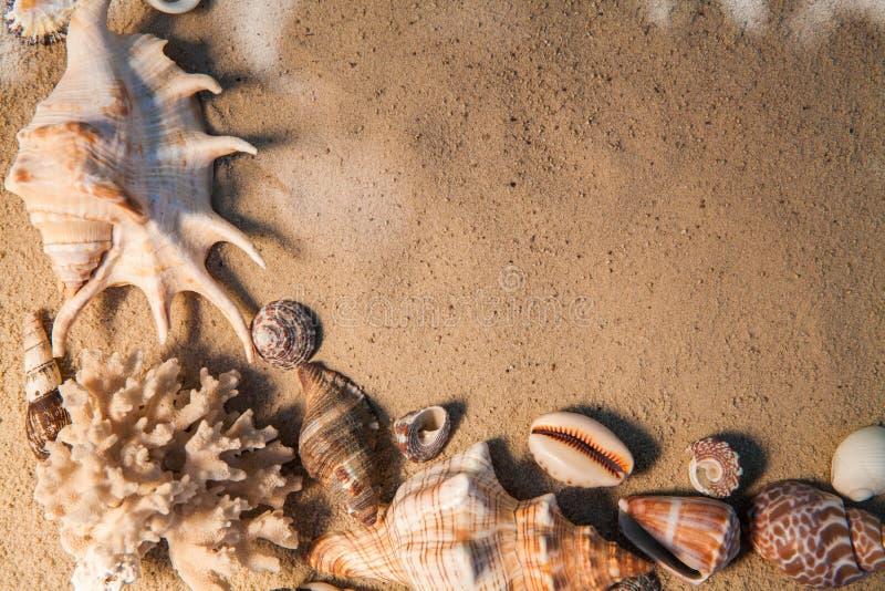 Shelles del mar con la arena como fondo Playa del verano imagen de archivo libre de regalías