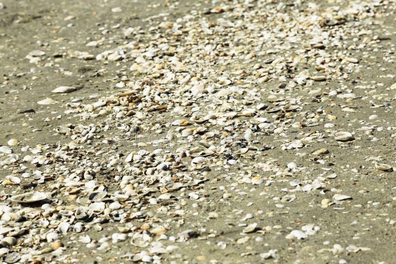 Shelles del mar en la arena imágenes de archivo libres de regalías