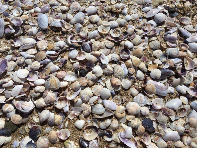 Shelles del mar en la arena Fondo de la playa del verano imágenes de archivo libres de regalías