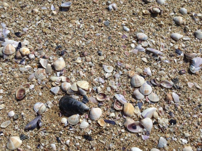 Shelles del mar en la arena Fondo de la playa del verano foto de archivo