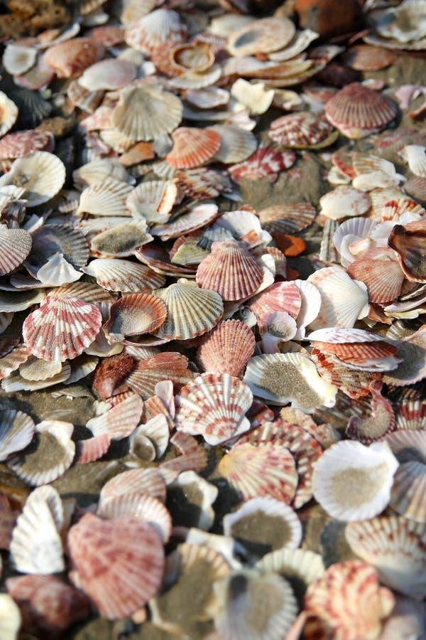 Shelles del mar en la playa imagenes de archivo