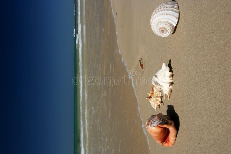 Shelles del mar en la playa imagen de archivo