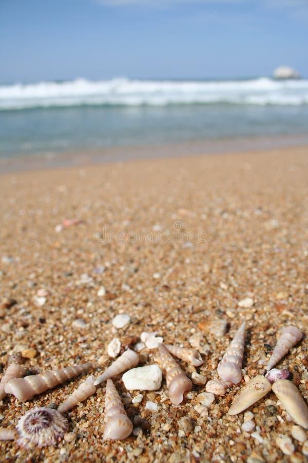 Shelles del mar en la playa con el espacio de la copia fotografía de archivo