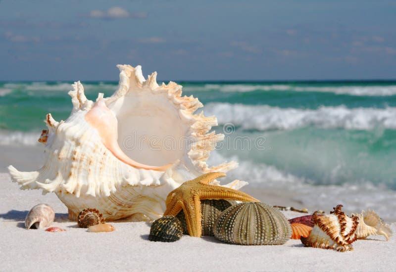 Shelles del mar, estrella de mar y pilluelo de mar en la playa imagen de archivo
