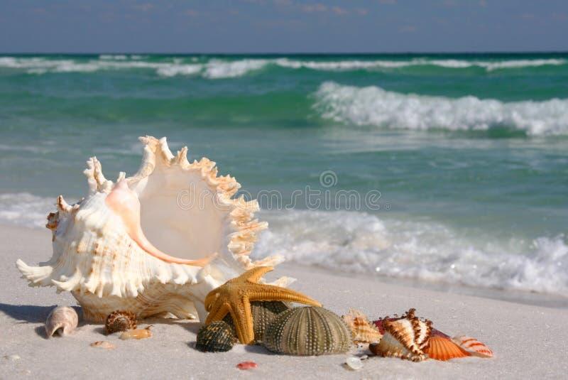 Shelles del mar, estrella de mar y pilluelo de mar en la playa imagenes de archivo