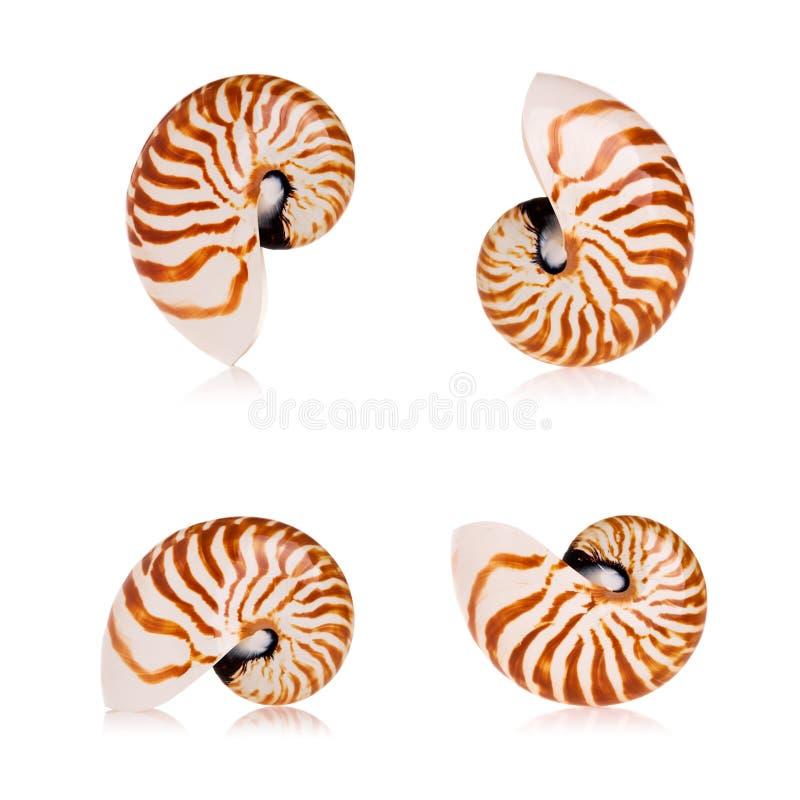 Shelles del nautilus fotografía de archivo