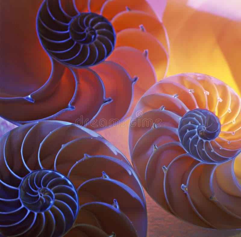 Shelles del nautilus fotos de archivo libres de regalías