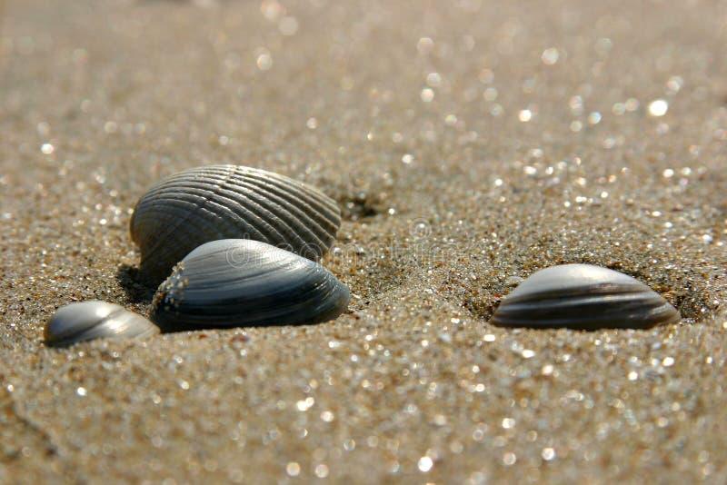 Shelles en la playa imagen de archivo libre de regalías