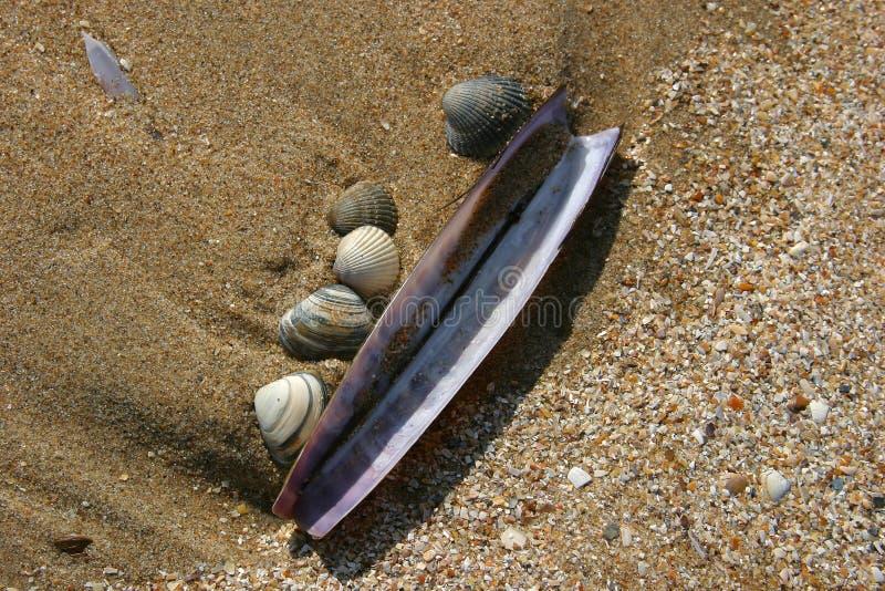 Shelles en la playa fotos de archivo libres de regalías