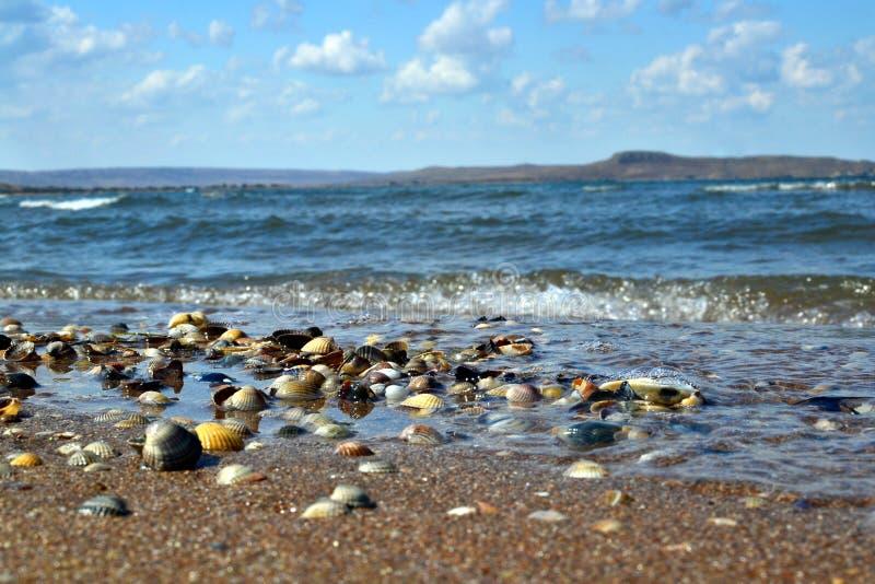 Shelles en la playa foto de archivo