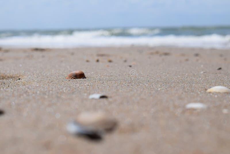 Shelles en la playa fotografía de archivo