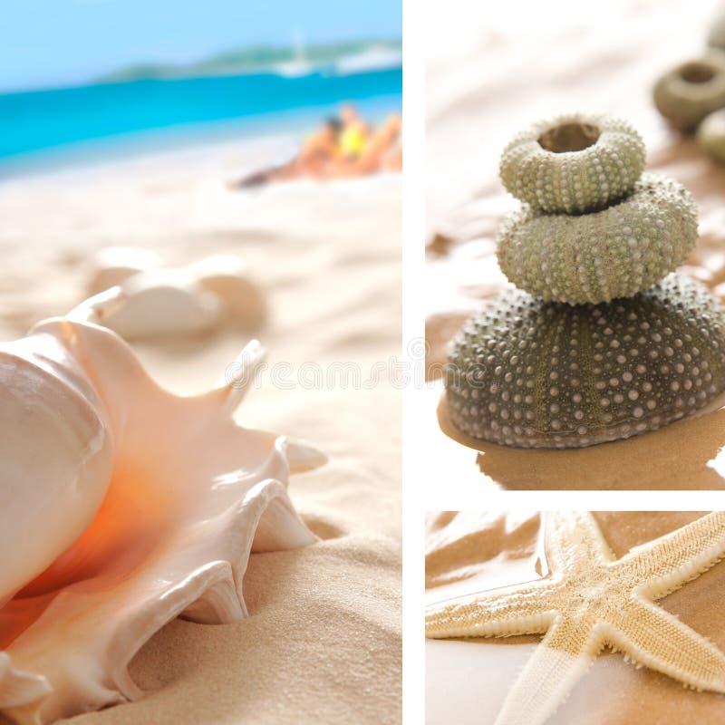 Shelles en la playa - collage imagen de archivo libre de regalías