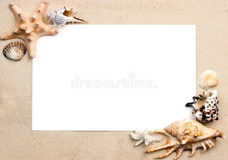 Shelles en marco de la arena fotos de archivo