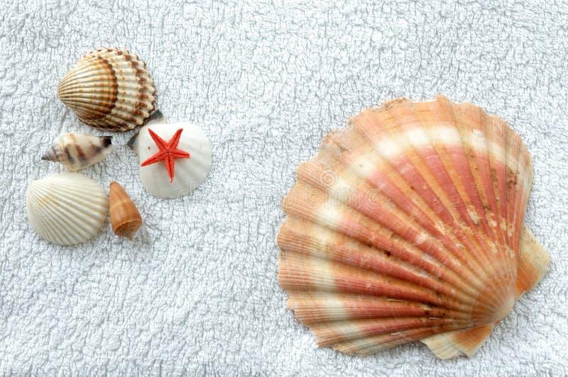 Shelles en una toalla foto de archivo