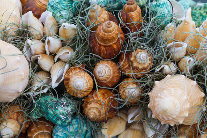 Shelles mezclados del mar fotos de archivo libres de regalías