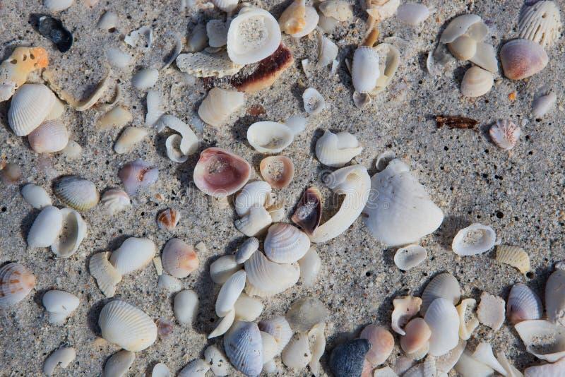 Shelles y arena fotografía de archivo