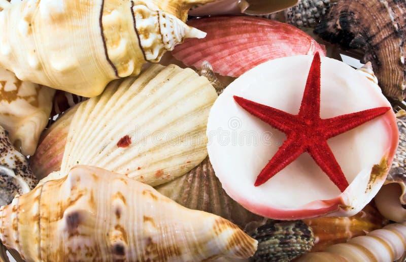Shelles y estrella del mar foto de archivo