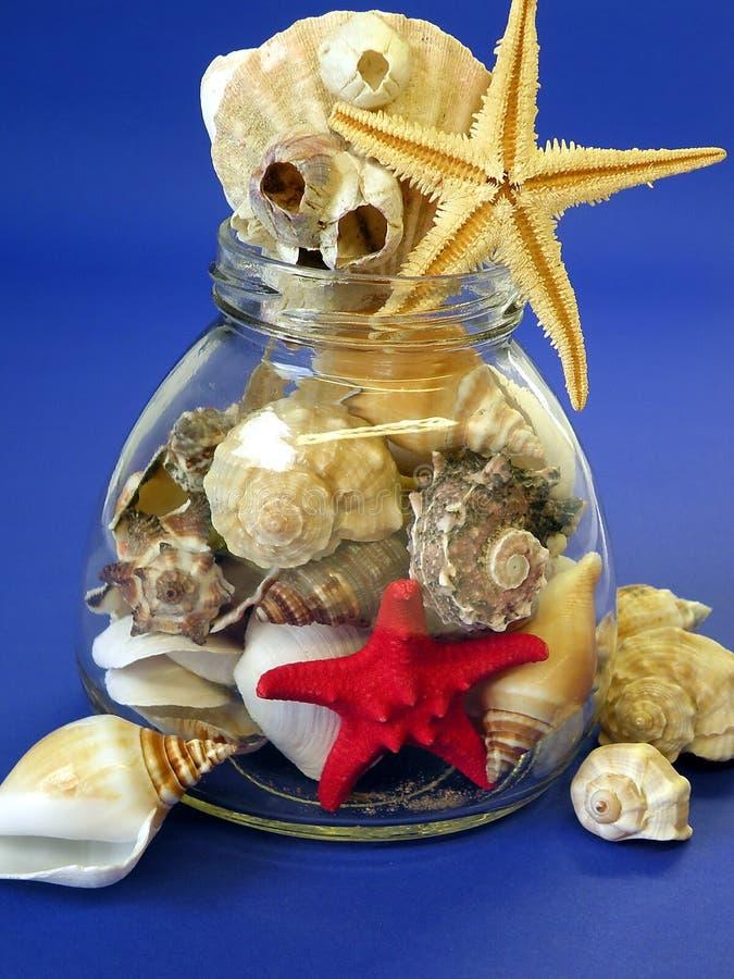 Shelles y estrellas de los pescados fotos de archivo