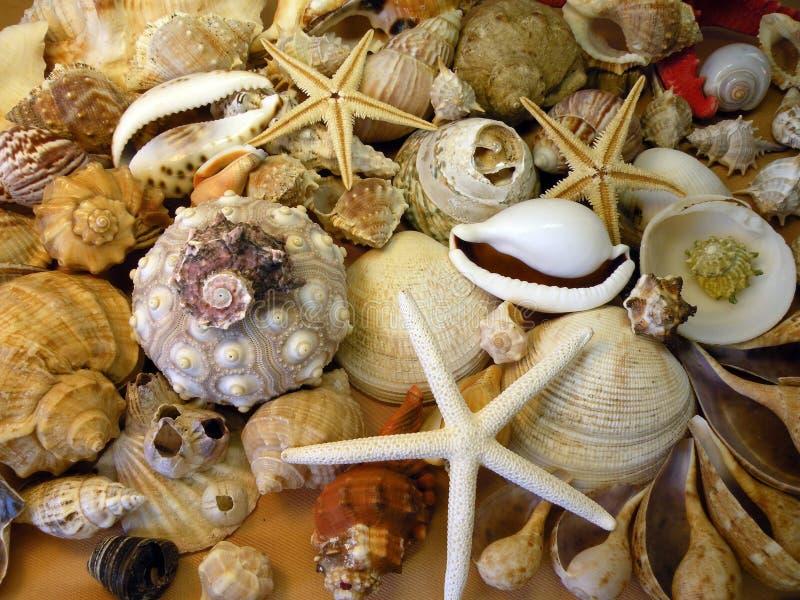 Shelles y estrellas de mar foto de archivo libre de regalías