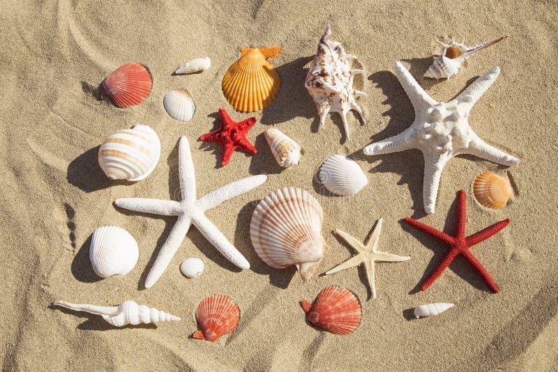 Shelles y estrellas de mar del mar imagen de archivo
