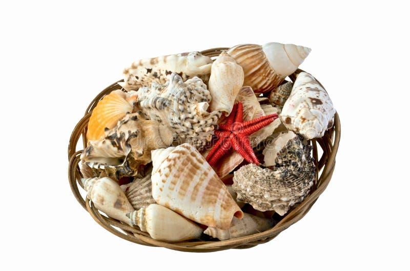 Shelles y estrellas de mar rojas en una cesta imagen de archivo libre de regalías