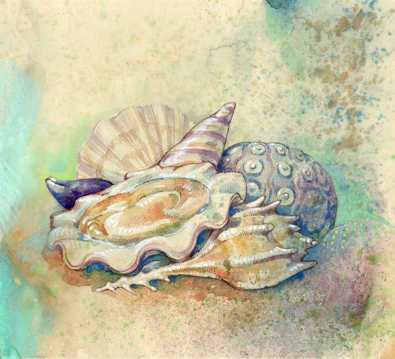 Download Shelles y molusco stock de ilustración. Ilustración de nutrición - 7150551
