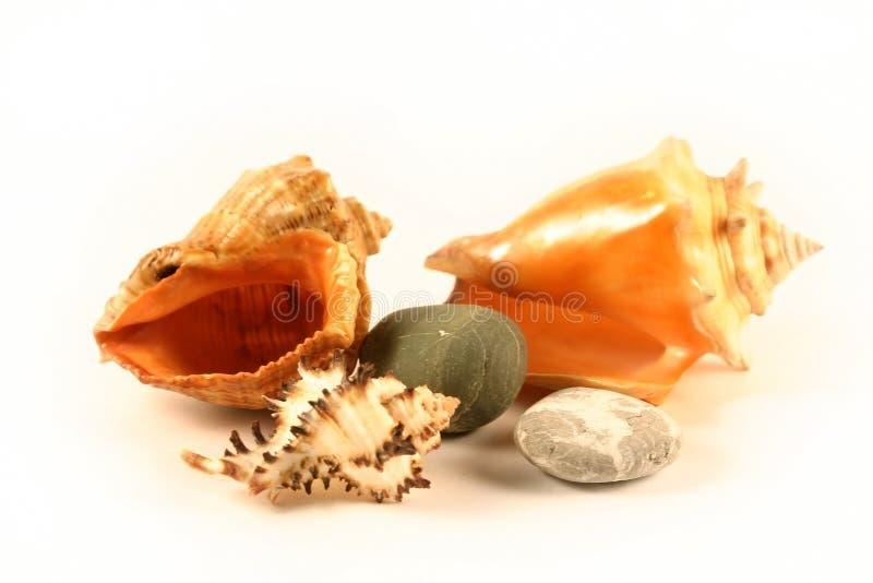 Shelles y piedras del mar fotografía de archivo