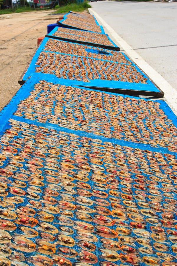 Shellfish высушенные в солнце стоковые изображения