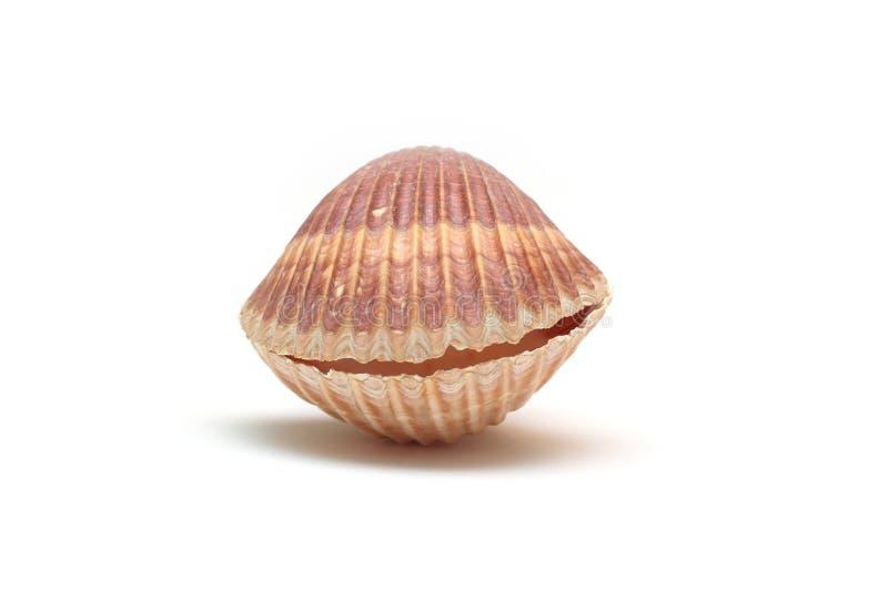 Shellfish Royalty Free Stock Photo