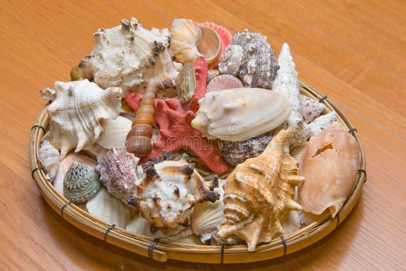 Download Shellfish stock photo. Image of underwater, nobody, shellfish - 7185520
