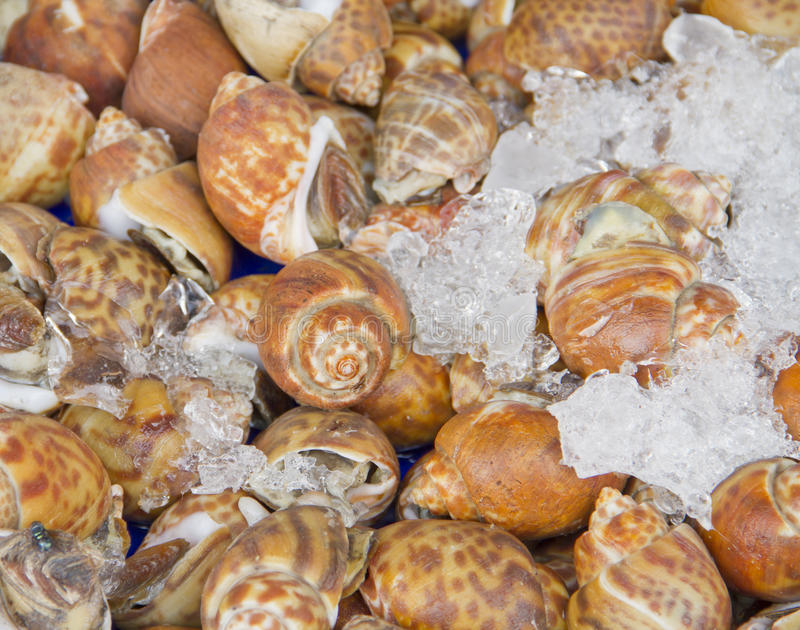 Download Shellfish Blood Cockles stock image. Image of diet, brown - 26481191