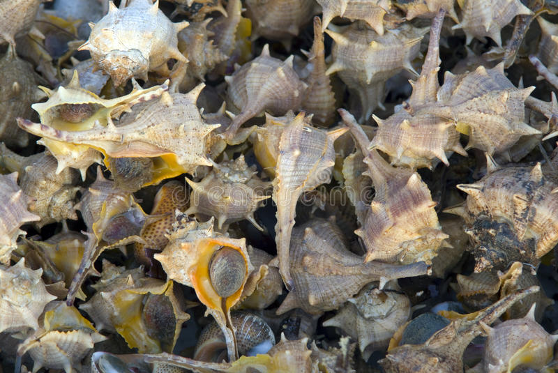 Download Shellfish close-up stock photo. Image of color, image - 23444390