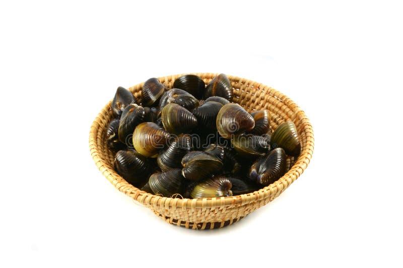 Shellfish milczkowie na koszu fotografia stock