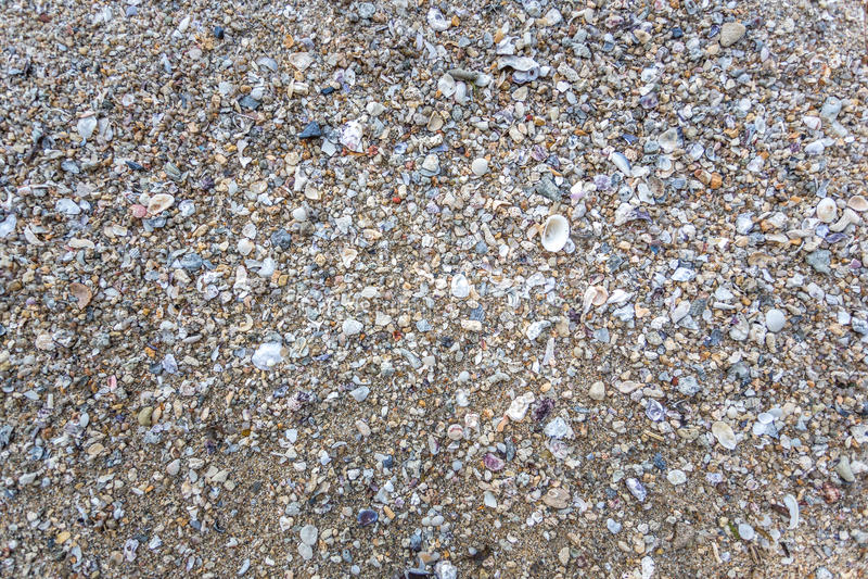 Shellfish na plaży obrazy stock