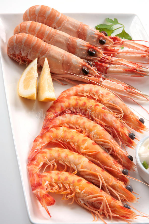 Shellfish prawns and crayfish royalty free stock photos