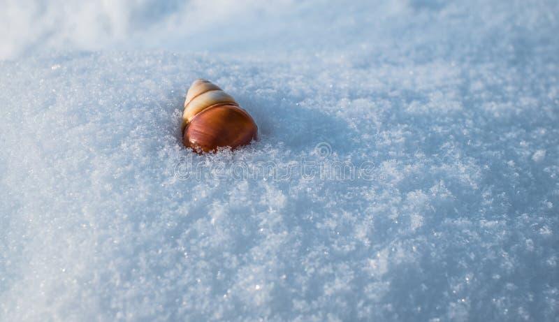 Shellh del caracol en nieve imagen de archivo libre de regalías
