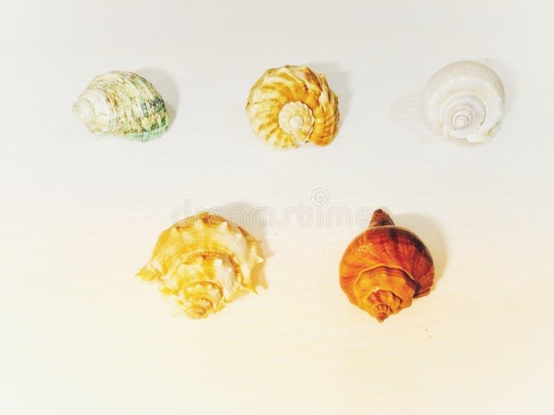 shells photo stock
