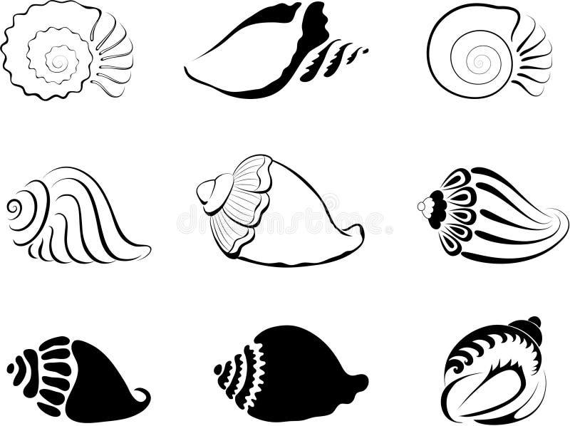 Shells. Element for design illustration vector illustration