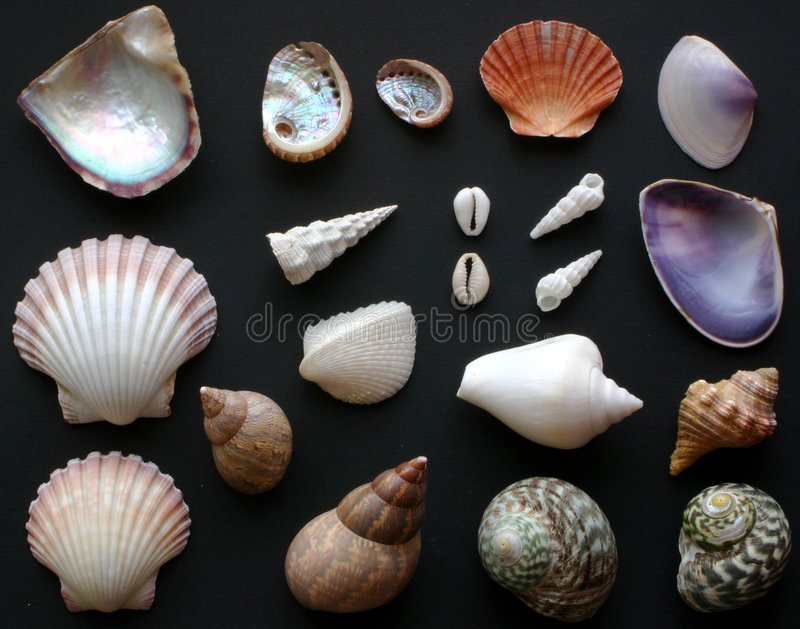 Download Shells Stock Photos - Image: 184703