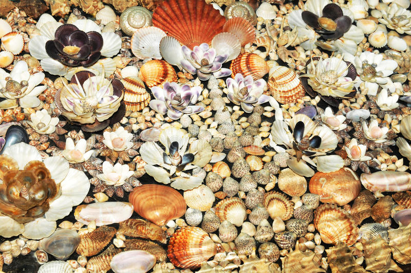 Download Shells stock photo. Image of oyster, shells, water, geology - 21352442