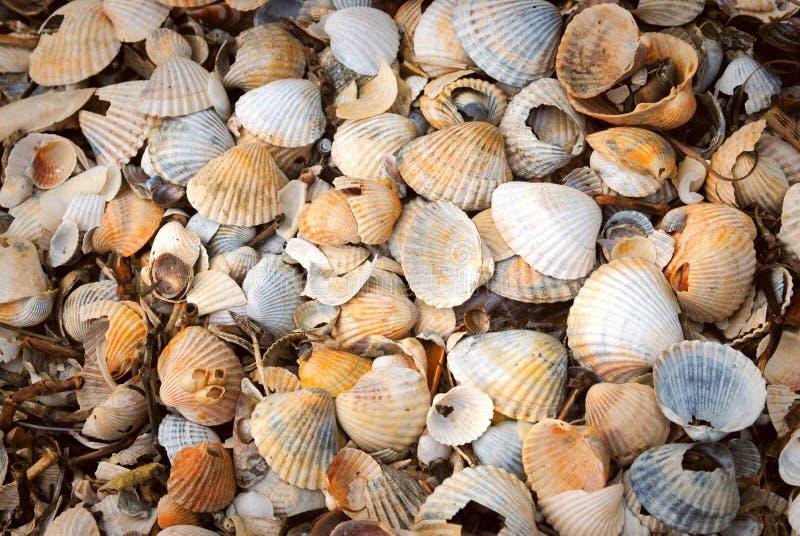 Shells. Beautyfull background of white, yellow and orange shells royalty free stock image