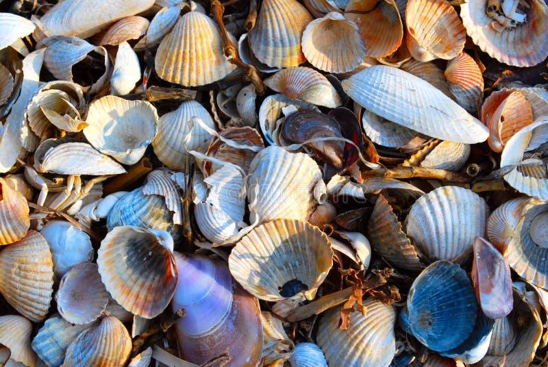 Shells. Beautyfull background of white, yellow and orange shells royalty free stock photography