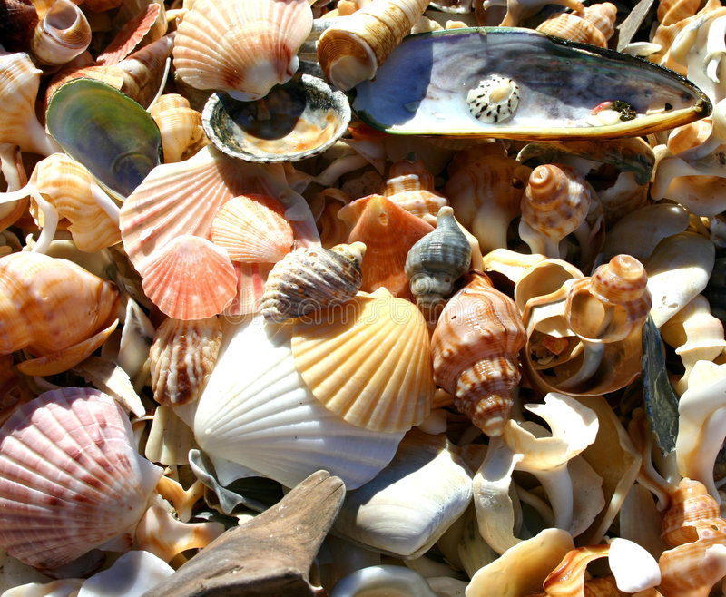 Shells stock fotografie