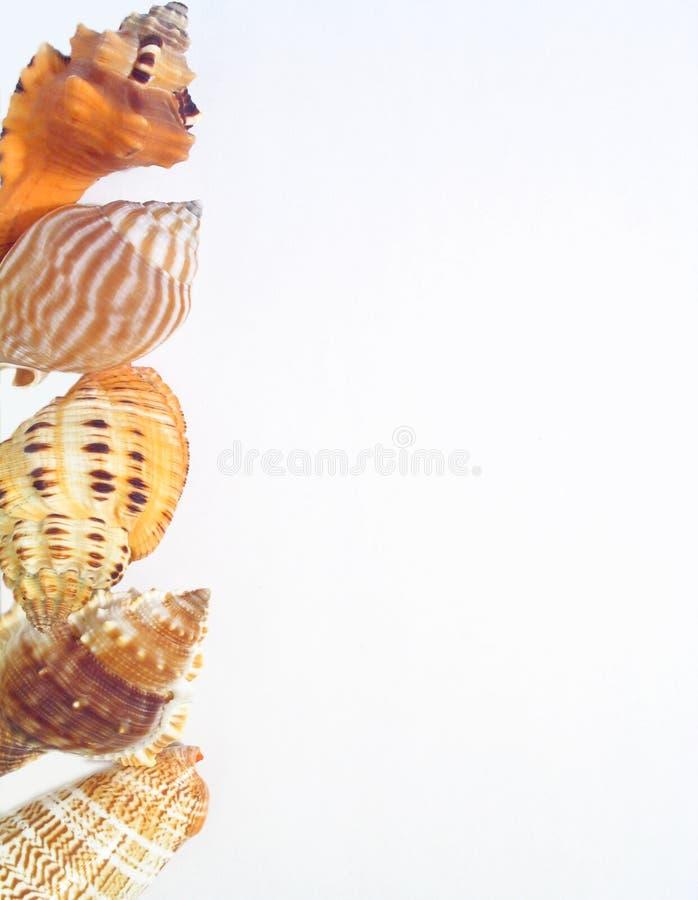 Free Shells Royalty Free Stock Image - 327086